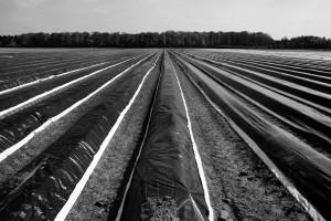 Agrarlandschaft11