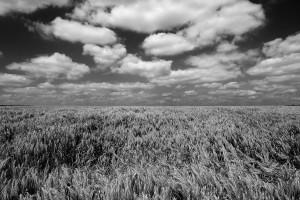 Agrarlandschaft13