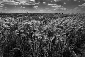 Agrarlandschaft14