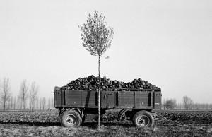 Agrarskulptur11