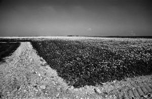 Agrarlandschaft05